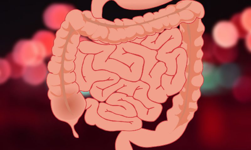 Gastrointestinal tract 1